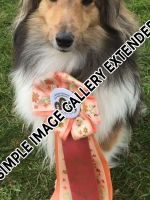 Shelties_005